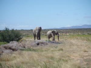 Südafrika, Safari 2014